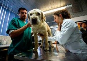 perro-adoptado-selva-ecuador